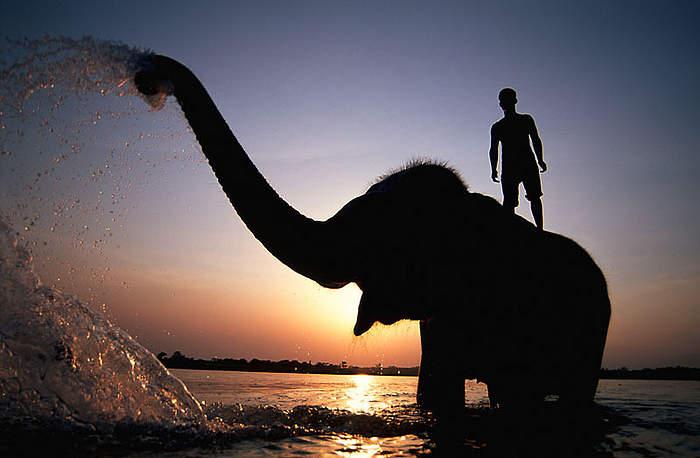 Il portatore e l'elefante